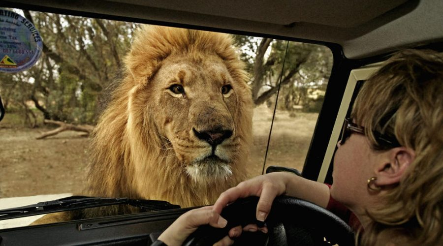 Top Safari Holidays in Africa